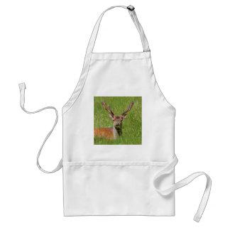 Buck fallow deer in grass standard apron