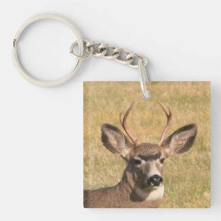 Buck In Grass Keychain