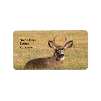 Buck In The Grass Address Label