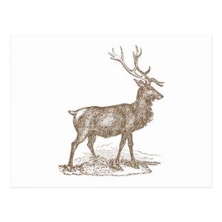 Buck Mule Deer Letterpress Style Postcard