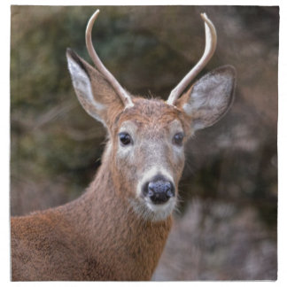Buck White-Tailed Deer Napkins