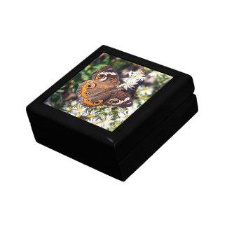 Buckeye Butterfly Gift Box