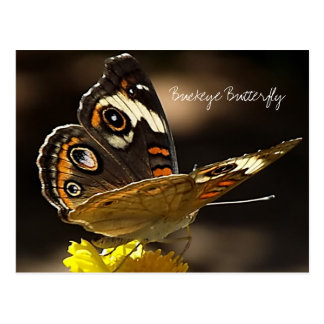 Buckeye Butterfly on a Yellow Flower with Text Postcard