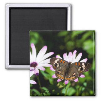 Buckeye Butterfly on Purple Flowers Square Magnet