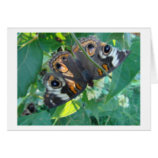 Buckeye Butterfly Tattered and Torn Card