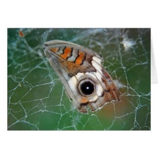 Buckeye butterfly wing in spider web card