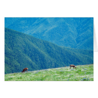 Bucks by the Mountains Card