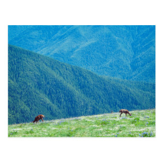Bucks by the Mountains Postcard