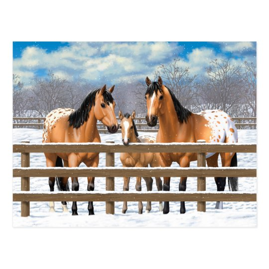 Buckskin Appaloosa Horses In Snow Postcard