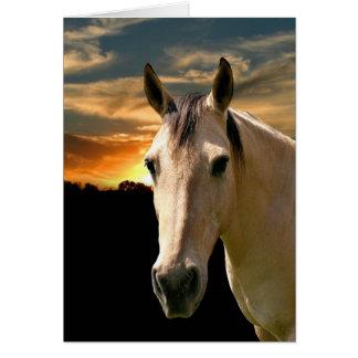 Buckskin horse sunset card
