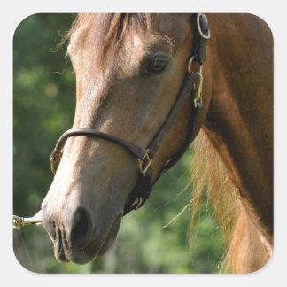 Buckskin Morgan Horse Square Sticker