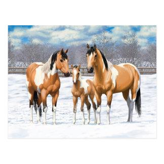 Buckskin Paint Horses In Snow Postcard