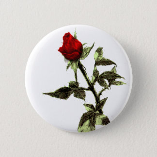 Bud of the red rose penciled 2 inch round button