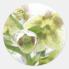 Bud To Blossom - White Hellebores Classic Round Sticker