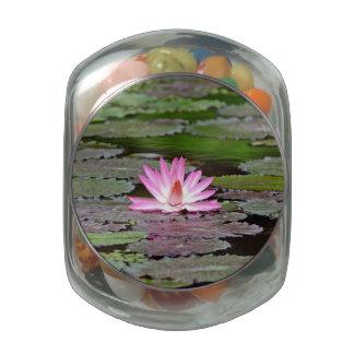 Buddha Asia Lotus Flower