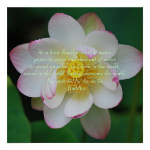 Lotus flower quote gifts on zazzle ca buddha quote lotus flower poster mightylinksfo
