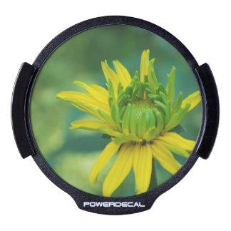 Budding False Sunflower LED Car Decal