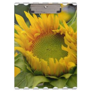 Budding Sunflower Clipboard