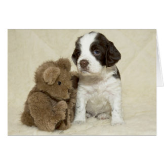 Buddy card. Featuring a springer spaniel puppy Card