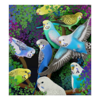Budgerigars & Ferns Poster