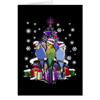 Budgerigars with Christmas Gift and Snowflakes Card