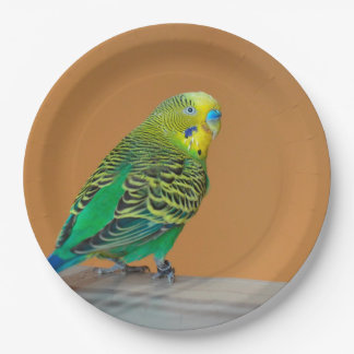 Budgie 9 Inch Paper Plate