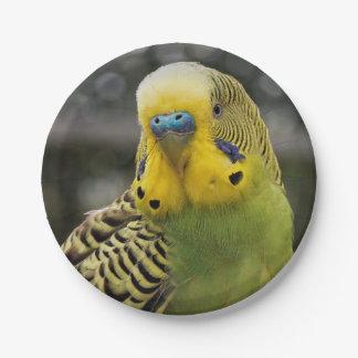 Budgie Bird 7 Inch Paper Plate