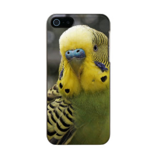 Budgie Bird Incipio Feather® Shine iPhone 5 Case