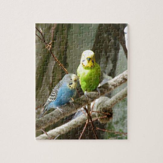 Budgie Bird Jigsaw Puzzle