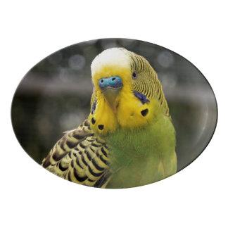 Budgie Bird Porcelain Serving Platter