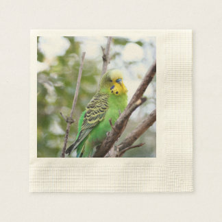 budgie disposable napkin