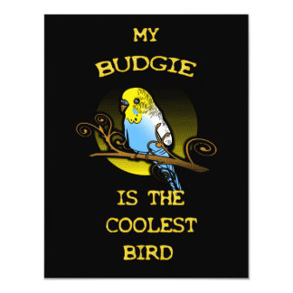 Budgie is the Coolest Bird Card