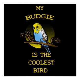 Budgie is the Coolest Bird Poster