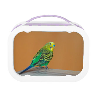 Budgie Lunchbox