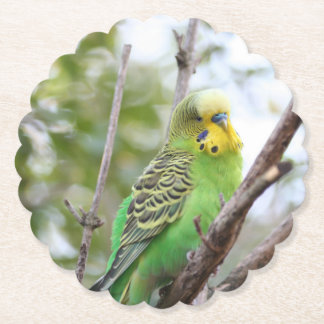 budgie paper coaster
