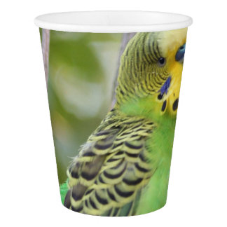 budgie paper cup