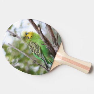 budgie ping pong paddle