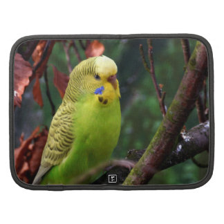 Budgie Planners