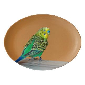 Budgie Porcelain Serving Platter