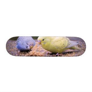 Budgie Skate Boards