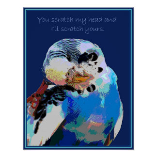 Budgie Wants a Scratch Poster