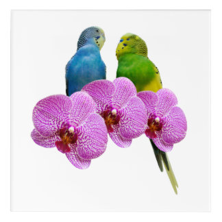 Budgie with Purple Orchid Acrylic Wall Art