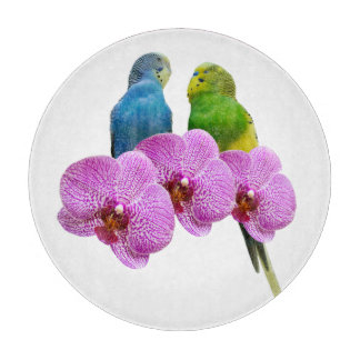 Budgie with Purple Orchid Boards