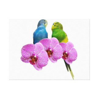 Budgie with Purple Orchid Canvas Print