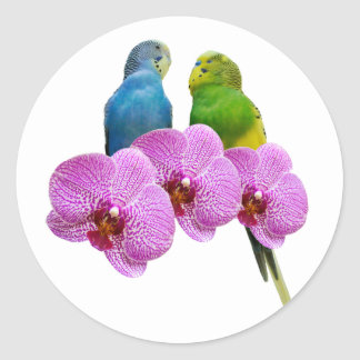 Budgie with Purple Orchid Classic Round Sticker