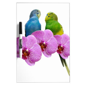 Budgie with Purple Orchid Dry Erase Board