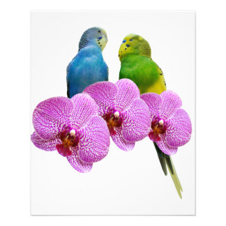 Budgie with Purple Orchid Flyer