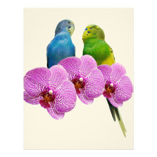 Budgie with Purple Orchid Letterhead