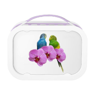 Budgie with Purple Orchid Lunch Box