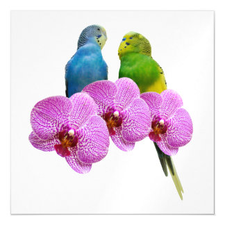 Budgie with Purple Orchid Magnetic Card